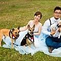 高雄狗狗寵物婚紗