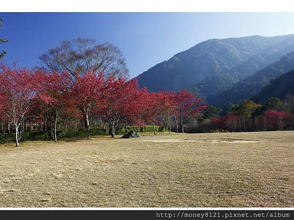 2014.01.23奧萬大賞櫻花 (26).jpg