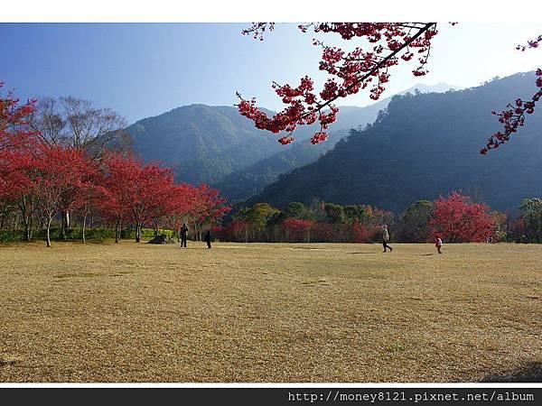 2014.01.23奧萬大賞櫻花 (28).jpg