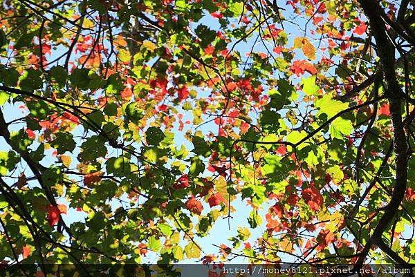 PhotoCap__MG_7084.jpg