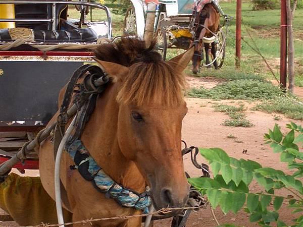 剪流海的馬