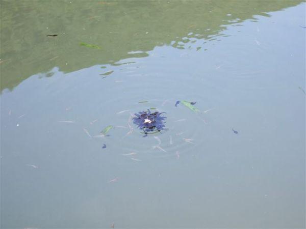 番外篇之蝌蚪聚餐