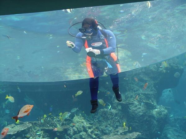 擦玻璃的潛水夫