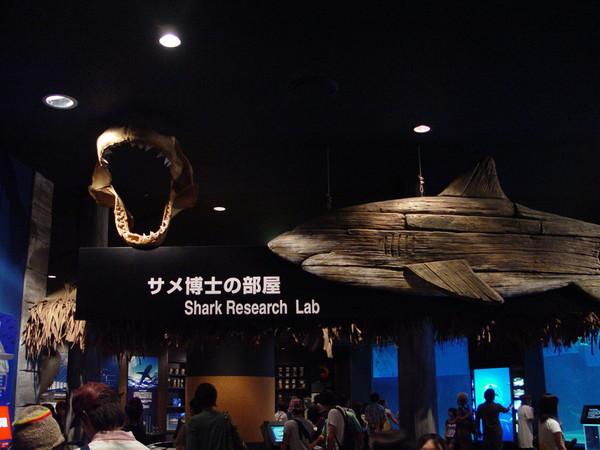 鯊魚博士的房間