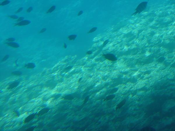 海底的景色X2