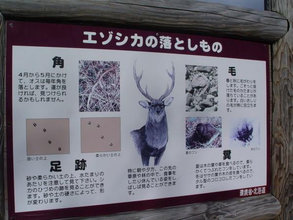 野鹿的告示