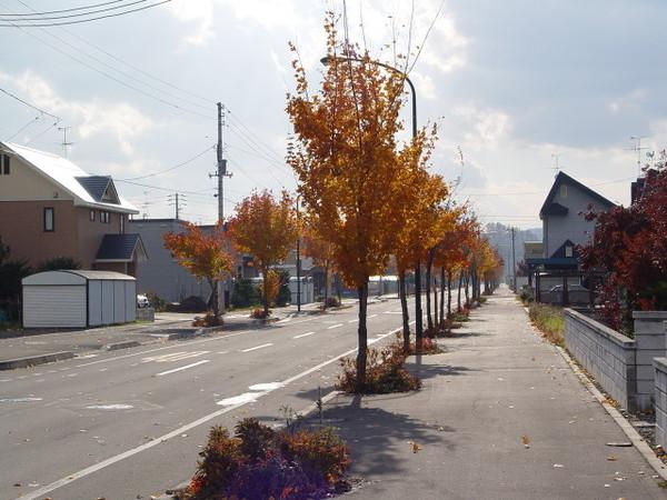 路上的行道樹