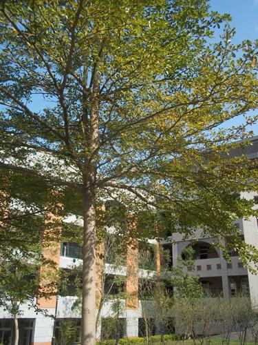 竹中校園8