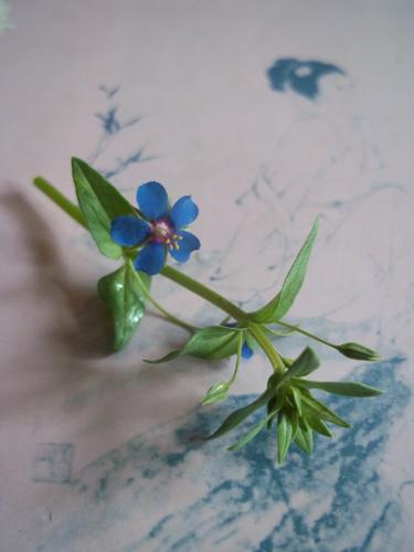 琉璃繁縷(海綠)