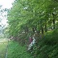 香楓與杜鵑