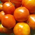 老爸種的番茄