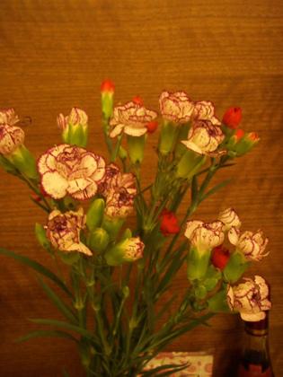 2014-05-11母親節康乃馨花