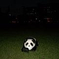 校園草坪上的熊貓