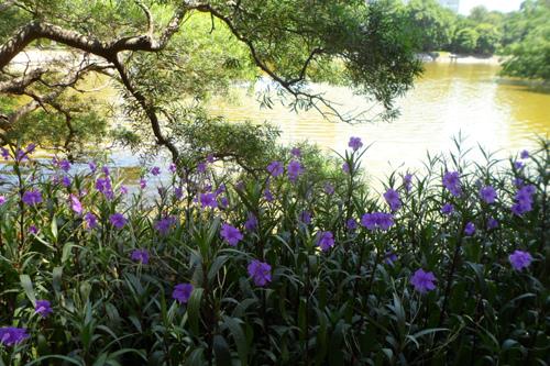 湖畔翠盧莉