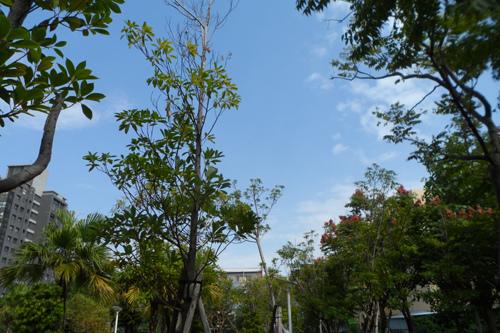 長春公園3