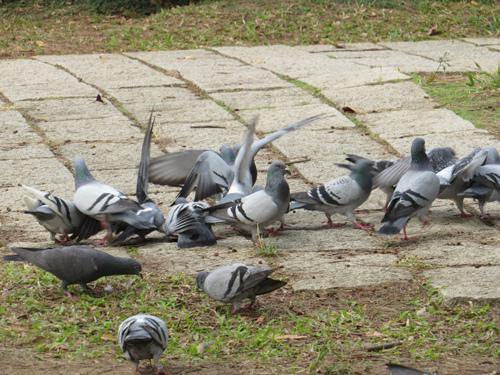 鳥為食忙1