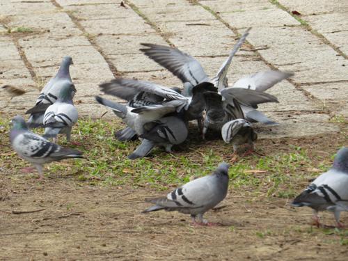 鳥為食忙2