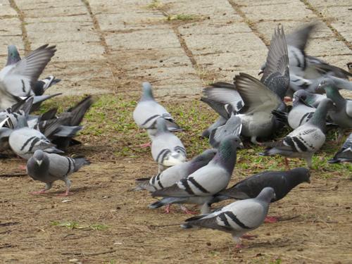 鳥為食忙3