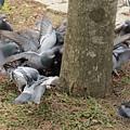 鳥為食忙4