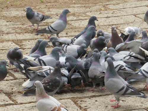鳥為食忙5