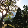 清大烏桕樹1