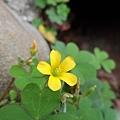 07路邊的小黃花