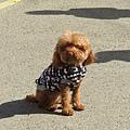 愛拍照的小狗4