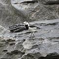 不知名的鳥3