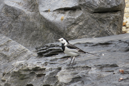 不知名的鳥4