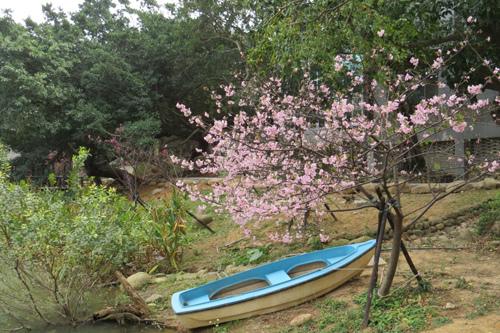 麗池公園河津櫻2