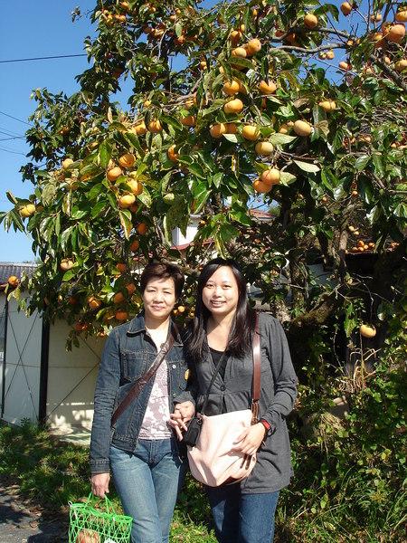 Day2~除了蘋果..還有柿子..現在也是當季喔..