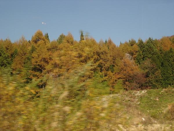 Day2~山頭已經開始出現許多紅葉...