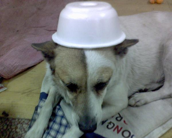 我的帽子真漂亮