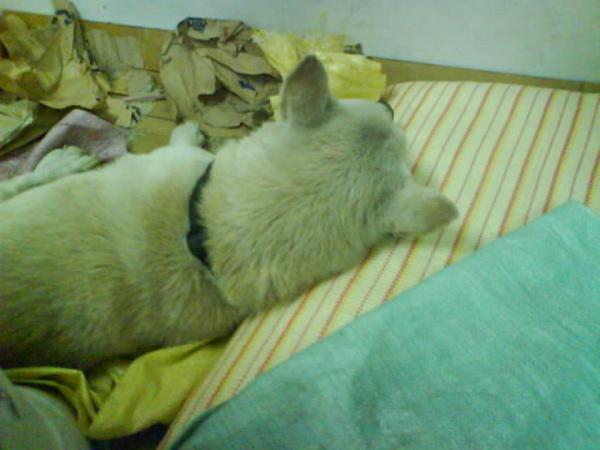 枕著睡比較舒服