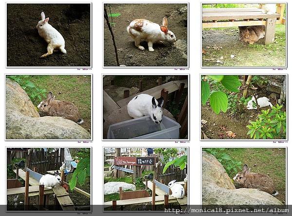 兔子圖.jpg