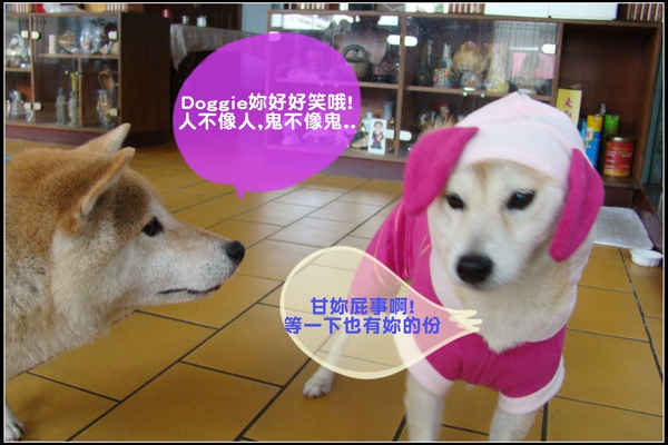 DSC00005-2.jpg
