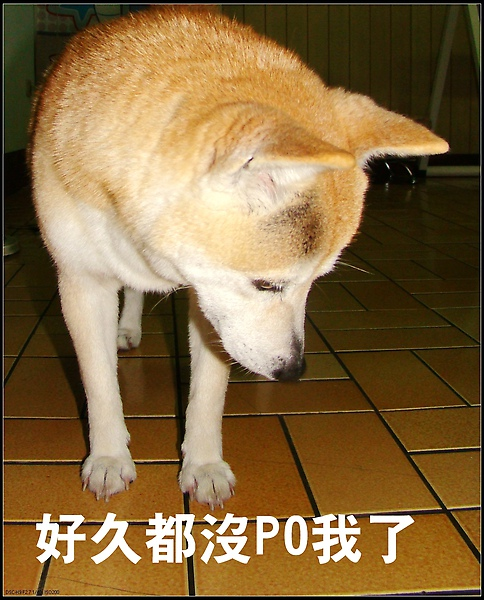 DSC01732-1.jpg