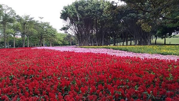 埔頂公園花海 (1).jpg