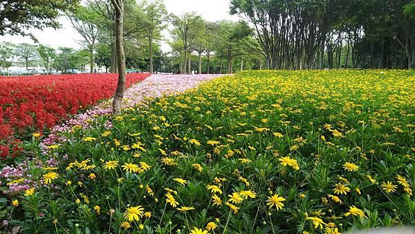 埔頂公園花海 (2).jpg