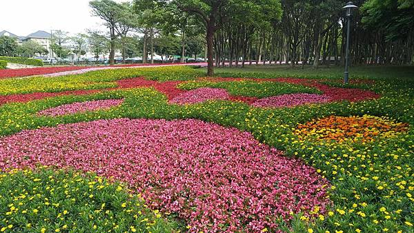 埔頂公園花海 (5).jpg