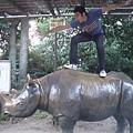 這次換征服犀牛了!!cool