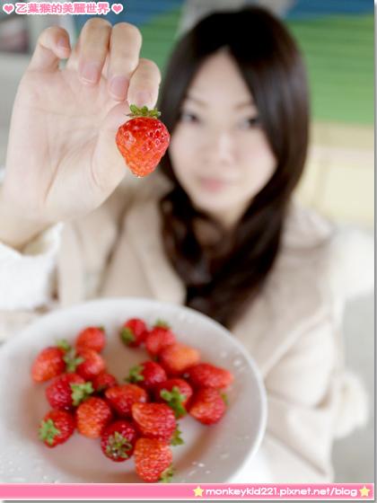 20140207山頂果園採草莓_00.jpg