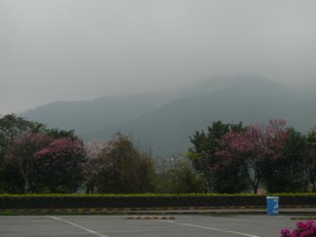 陽明山12.JPG