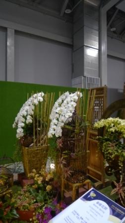 flora night 52.JPG