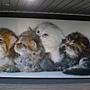 天使館 貓攝影.JPG
