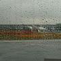 大佳區 雨中的花海.JPG