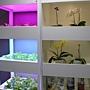未來館 未來庭園區 LED植物櫃.JPG