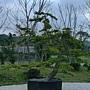 風情各異的樹種.JPG