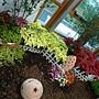未來館 聖誕紅庭園造景.JPG