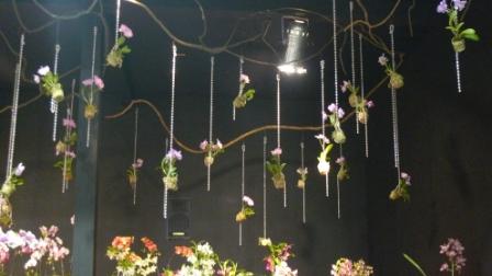 flora night 25.JPG